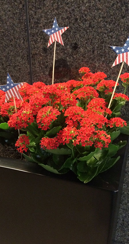 An image of Fourth-of-July-inspired blooming flowers