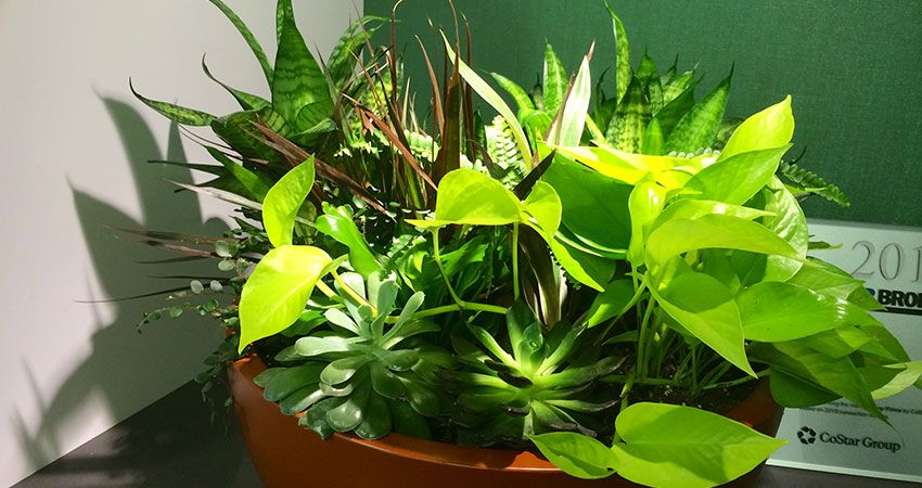 An image of a planter in a corporate office
