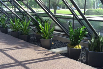 An image of a flower bed in a corporate atrium that was custom designed