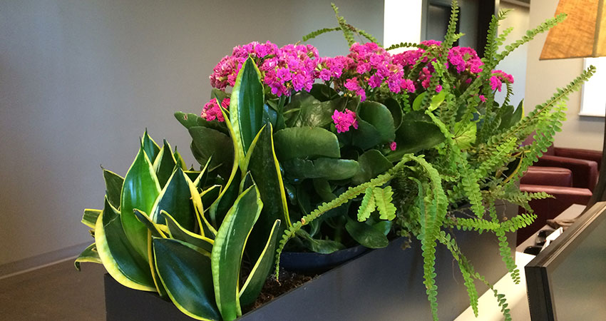 An image of planters in a corporate office