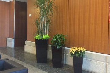 An image of planters in a corporate lobby